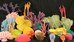Coral-Group-1-1